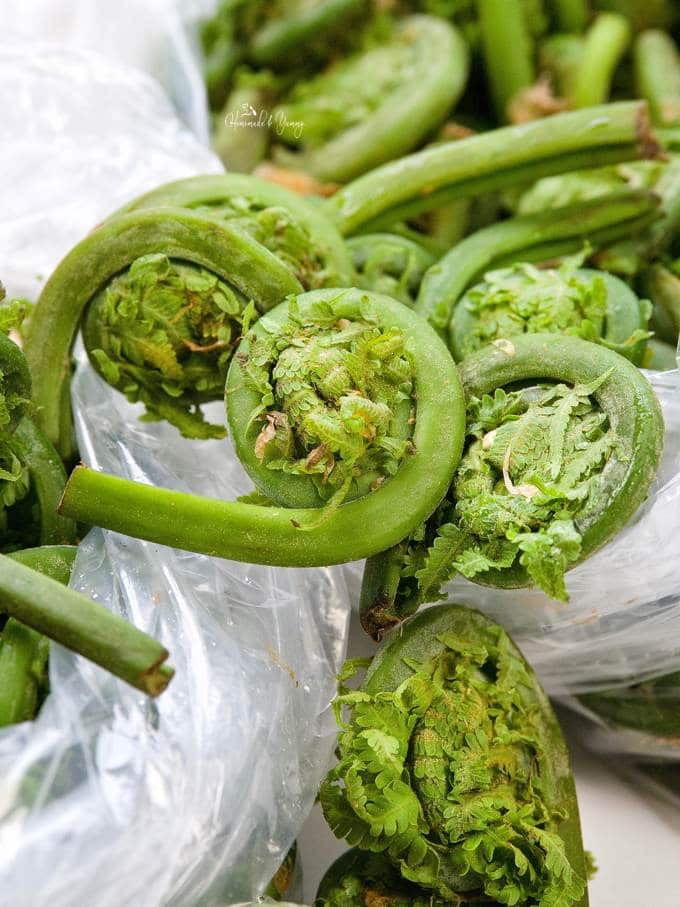 Close up of fiddlehead ferns fresh from the market.