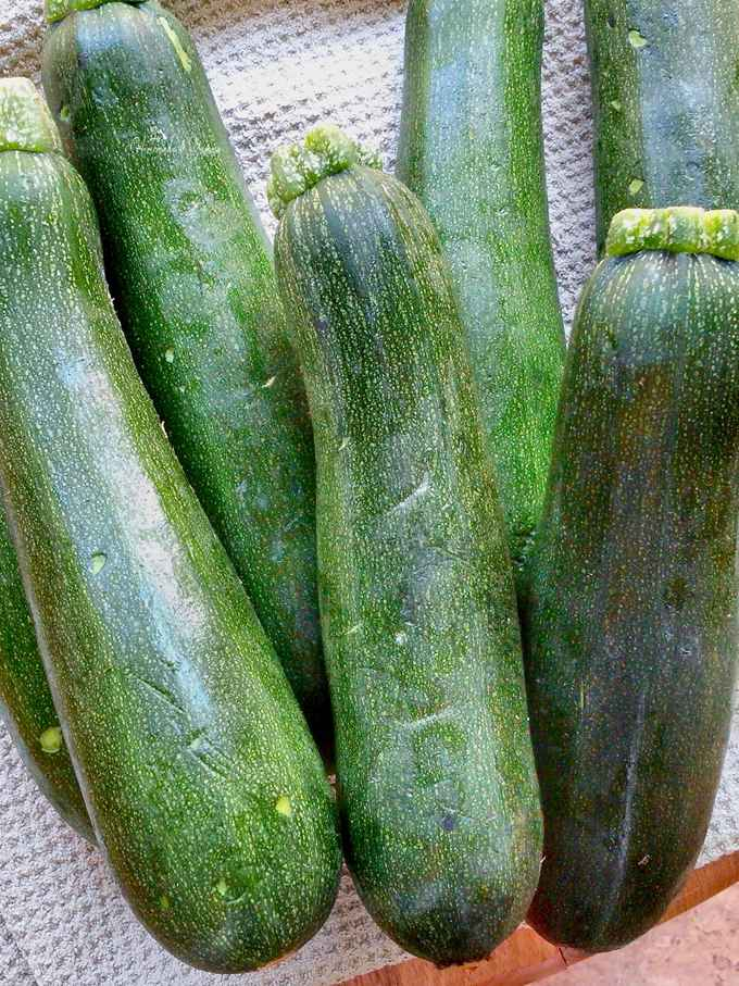 A pile of zucchinis ready to get shredded and made into burgers.