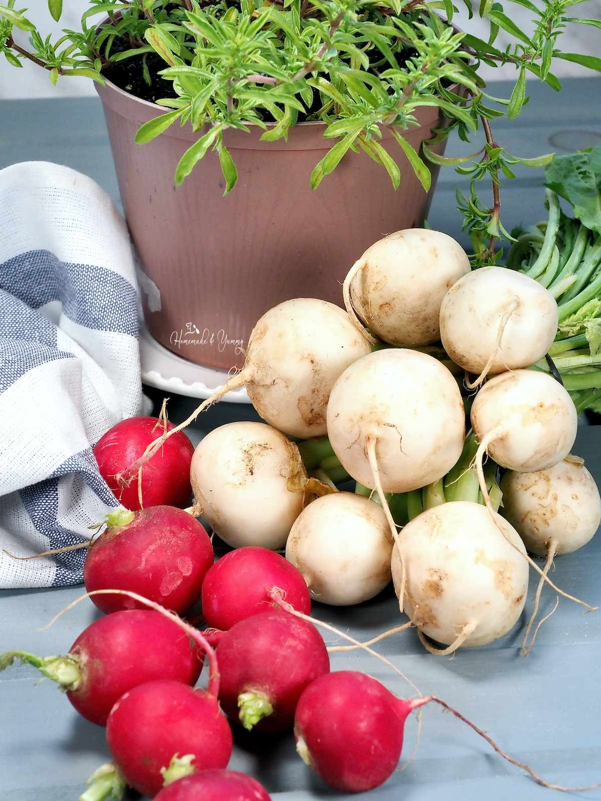 Bunches of radishes and turnips on a counter with a pot of herbs in the background.